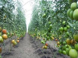 agric horticulture