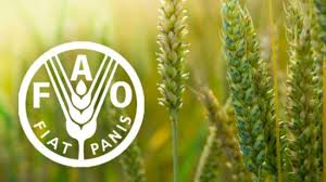 Food and Agricultural Organisation (FAO)