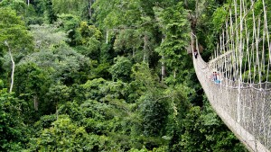 Ghana's forests