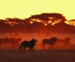 Limpopo tourism growth