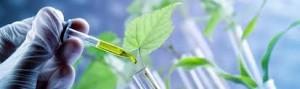 bio-economy