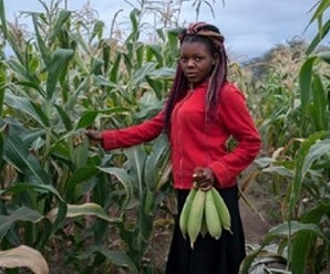 A Zimbabwe young lady shows off a bumper harvest from a traditionally planted drought resistant maize seed in the 2018/19 cropping season. Photo by Khumbulani Taruvanda, CAJ News Africa.