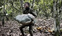 child labour in Ivory Coast. Photo, file picture