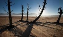 Cape drought