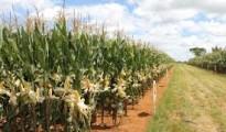 Zimbabwe agric