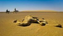 Camel dies of drought in Algeria