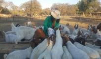 Great Zimbabwe University (GZU) graduate and Masvingo young entrepreneur, Gracious Rumbidzai Shonhai (24). Photo by Sukuolunhle Ndlovu, CAJ News Africa